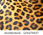 Portrait Of Leopard In Its...