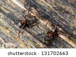 two ants facing the camera   Shutterstock . vector #131702663