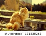 The Ginger Cat