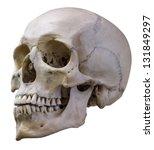 Single Skull Isolated On White...