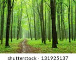 Green Forest Background In...