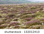 blooming moss and small nordic...