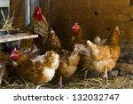 Free Range  Chickens On Organi...