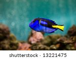 fish in aquarium | Shutterstock . vector #13221475