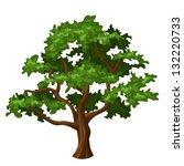 oak tree. vector illustration.