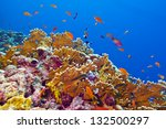 Coral Reef With Fire Coral And...