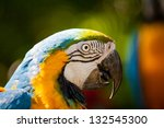macaw bird head - stock photo