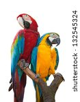 A couple of beautiful macaws on white background - stock photo