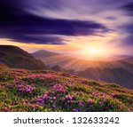 Spring landscape with a beautiful sunset in the mountains and rhododendron flowers - stock photo