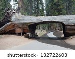 Tunnel Log In The Sequoia Park...