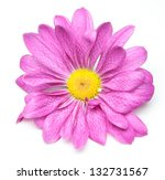 chrysanthemum single flower | Shutterstock . vector #132731567