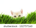 Cat Behind Grass Isolated On...