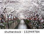 beautiful cherry blossom tunnel over river - stock photo
