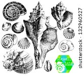Hand drawn collection of various seashell illustrations isolated on white background