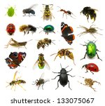 Set Of Insects On White...