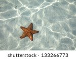 starfish on the bottom of the... | Shutterstock . vector #133266773