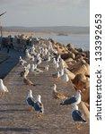 port of essaouira  morocco | Shutterstock . vector #133392653