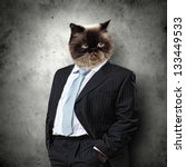 Funny Fluffy Cat In A Business...