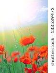 poppy flowers | Shutterstock . vector #133539473