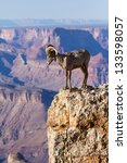 Desert Big Horn Ram Standing On The Edge Of Grand Canyon - stock photo