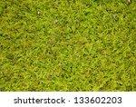 Green Moss Background Macro Shot