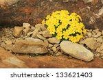 A Mound Of Yellow Dionysia...