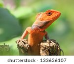 orange lizard sitting on the tree in the natural habitat. close-up photos - stock photo