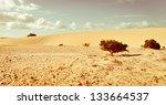 Life Against Desert. Corralejo...