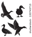 beak,bird,black,canard,down,drake,duck,duck hunting,duck's flesh,feathers,flock of birds,fowl,goose,hunting,icon