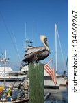 Pelican On A Marina Piling By...