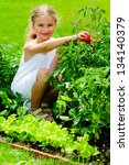 Garden, vegetable, gardening - lovely girl picking ripe tomatoes - stock photo