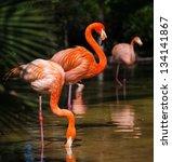 Group Of Pink Flamingos Near...