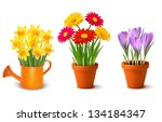 background,beautiful,bloom,blossom,bouquet,buds,bunch,can,celebration,color,colorful,crocus,daffodil,daisy,decorate