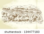 vineyard france   hand drawn... | Shutterstock .eps vector #134477183