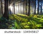 Stock photo union wood sunrise 134545817