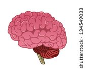 human brain isolated | Shutterstock .eps vector #134549033