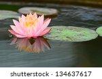 beautiful  water lilly flower | Shutterstock . vector #134637617