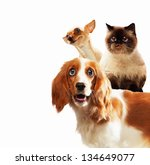 Stock photo three home pets next to each other on a light background funny collage 134649077