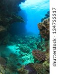 marine life in the red sea | Shutterstock . vector #134733317