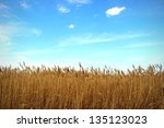 Reeds Nature Background