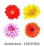 flowers isolated on white | Shutterstock . vector #135157823