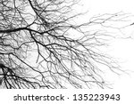 tree branches isolated on the... | Shutterstock . vector #135223943