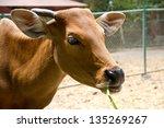 banteng  red bull in rainforest ... | Shutterstock . vector #135269267