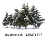 Trees spruce isolated on white background - stock photo