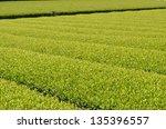 green tea garden   Shutterstock . vector #135396557