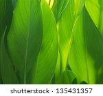 green leaves | Shutterstock . vector #135431357