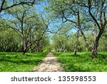 blooming spring garden in may.... | Shutterstock . vector #135598553