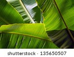 Banana Leaf Backlit Sun  ...