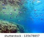 beautiful underwater view with...   Shutterstock . vector #135678857