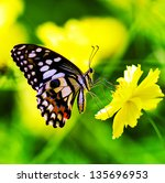 Butterfly On A Yellow  Flower